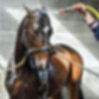 horse-2182589_640.jpg