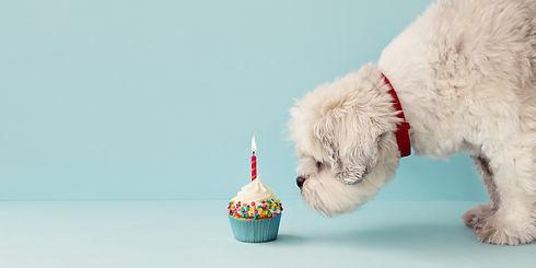 Small white dog and birthday cupcake.jpg