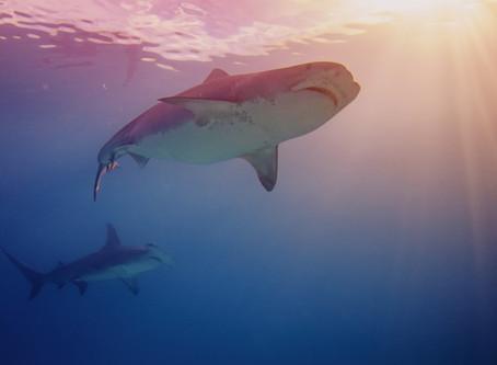 Epic Diving | Bahamas Shark Diving