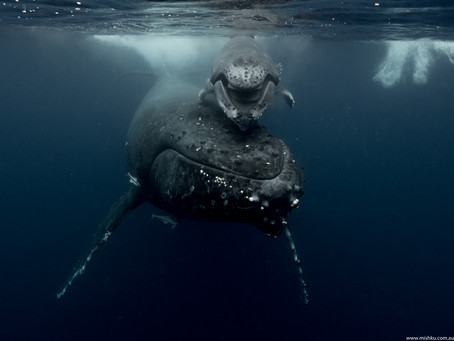 Fotógrafa Australiana Michaela Skovranova
