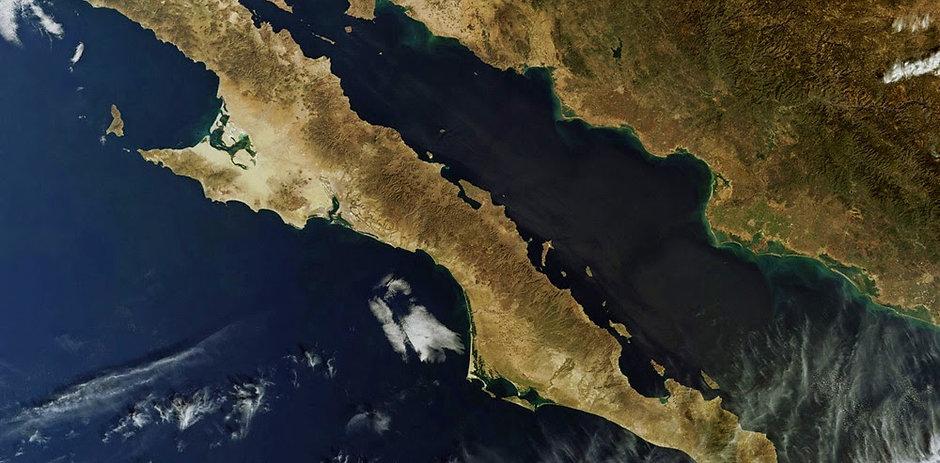 Live a Board Mar de Cortés Valentina