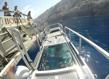 Horizon Charters   Buceo con Tiburónes
