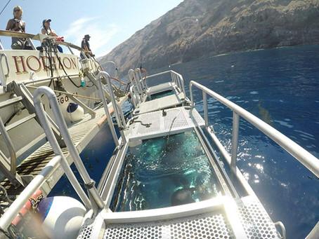 Horizon Charters | Buceo con Tiburónes