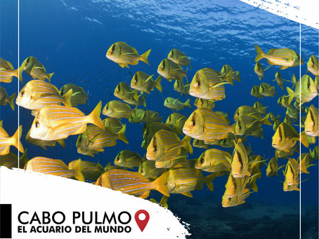 Cabo Pulmo | El Acuario del Mundo