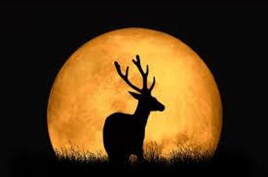 buck moon eclipse.jpg