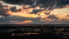 Koehool - Nederland