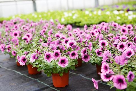 fioraio-floralbesina-albese-con-cassano-