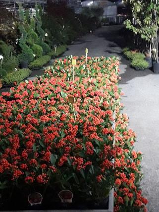 giardinaggio-alla-rotonda-Grandate-013-6