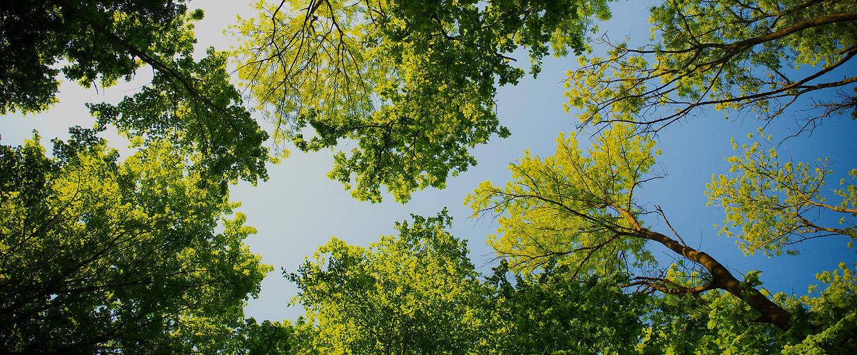 puu ja metsä