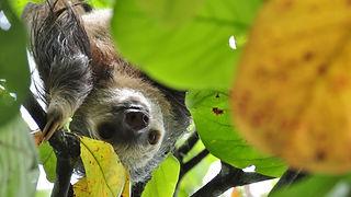 sloth-1448822_1280.jpg