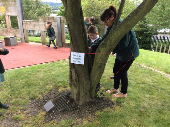 Year 1 bubble learn about trees