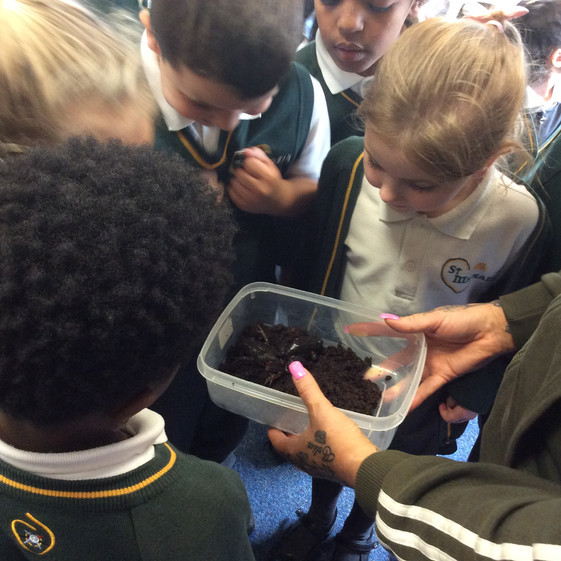 Animal Investigation in Y1!