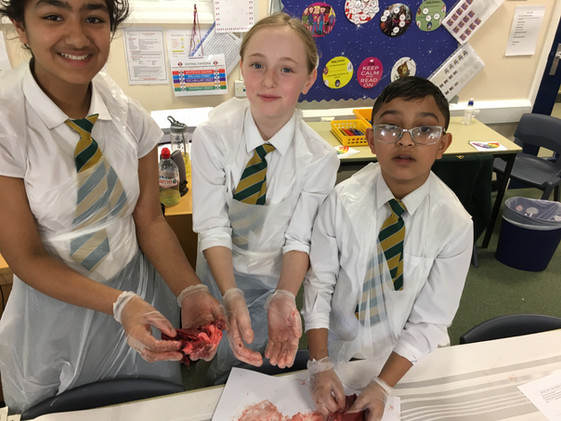 Heart Dissection!