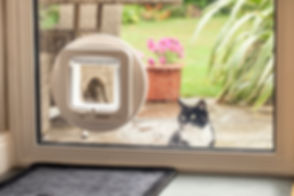 SureFlap_Microchip_Cat_Flap_Bramble_Glas