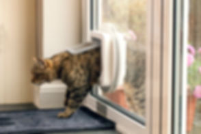SureFlap_Microchip_Cat_Flap_Side_On_Glas