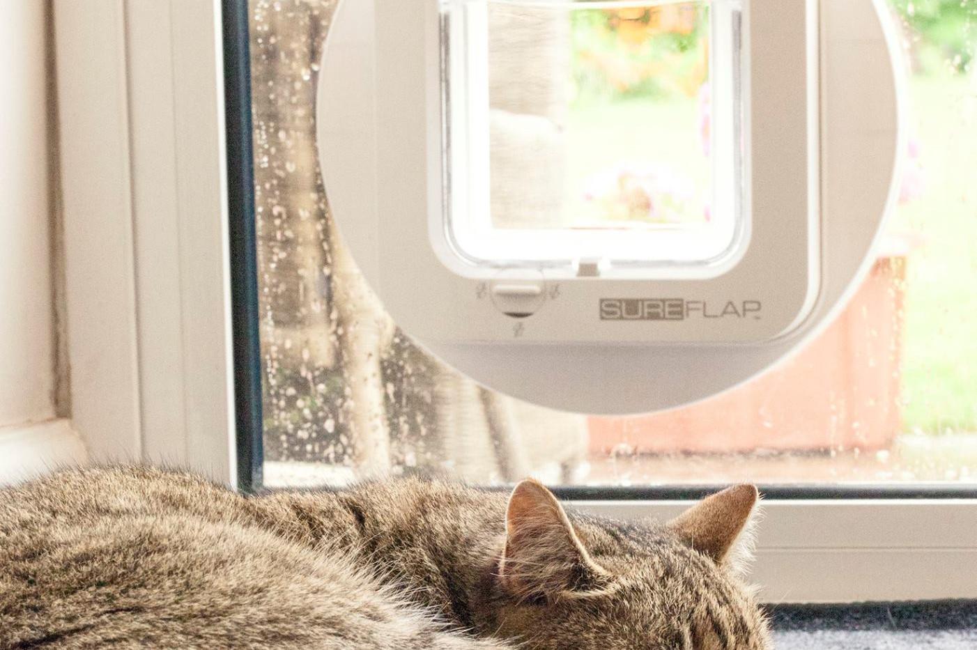 Sureflap Microchip Cat Flap