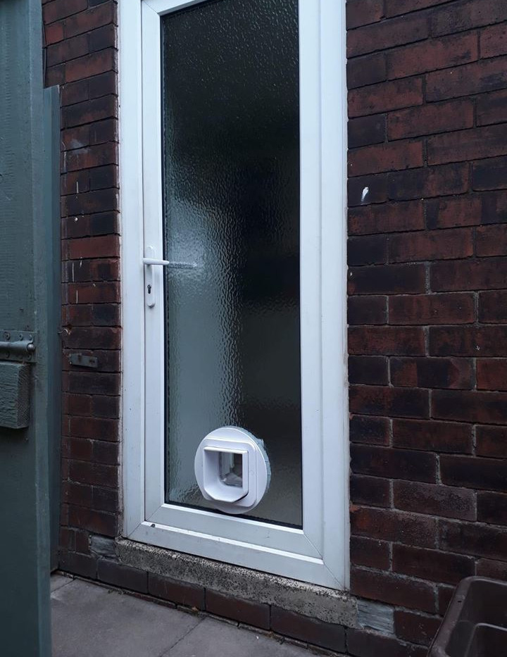 Cat Flap into Obscure Glass