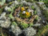 Land Art hiver 3.jpg
