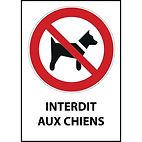 panneau-iso-en-7010-rectangulaire-interdit-aux-chiens-p021.jpg