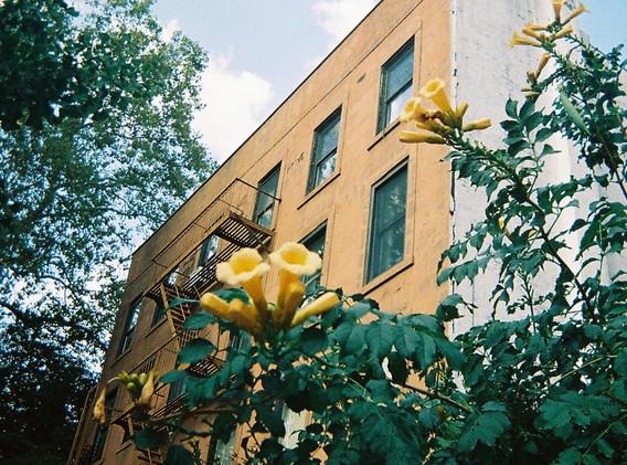 Yellow in Brooklyn