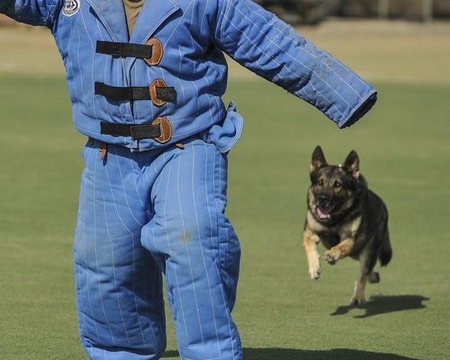 man vs dog evg seeyou budapest