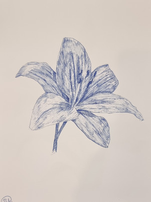 Dip Pen Lilly Drawing