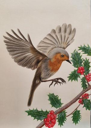 Christmas Robin Drawing by James Carter Art