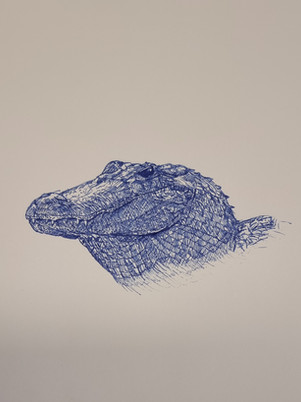 Alligator Dip Pen Drawing