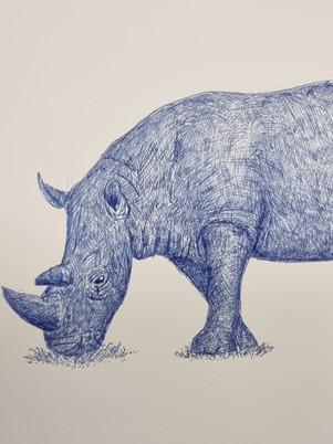 Rhino Pen Drawing