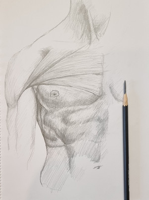 Chest Anatomy Sketch