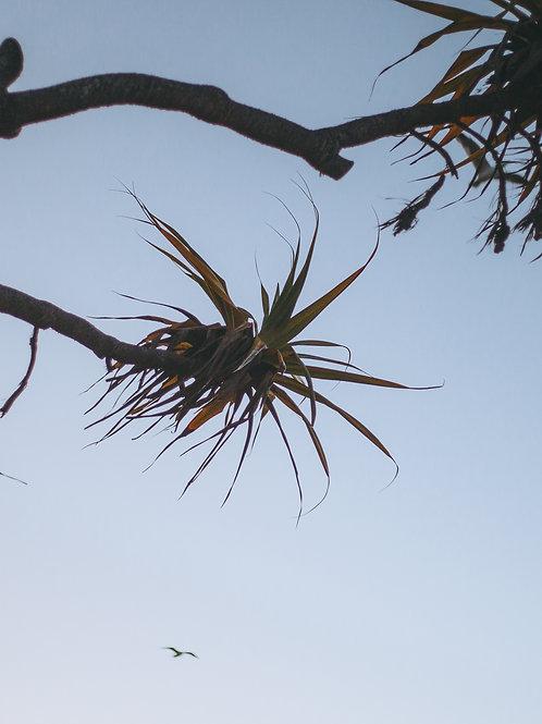Palm Tree Paradise / Byron Bay