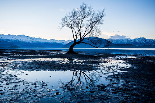 That Wanaka Tree / Wanaka