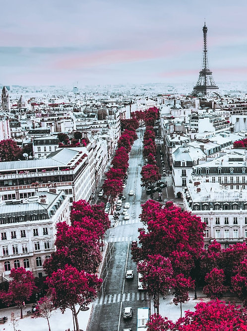 Pastel Pink Paris ( Portrait )