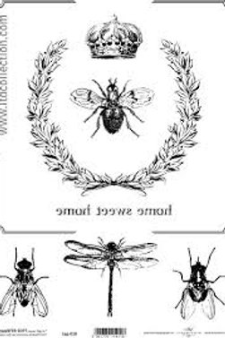 DragonFly- Image Transfer Paper