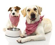 dreamstime_Dogs eating.jpg 2.jpg