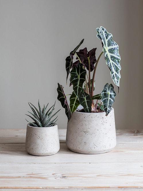 Concrete Set of 2 Plant Pots - Garden Trading