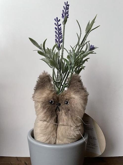 Lavender:Lavenmeow(ラベンダー)