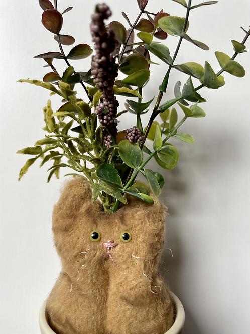 Eucalyptus:Eucatlyptus(ユーカリ)