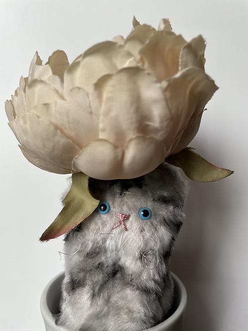 Rose Cat:(ローズ)