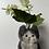 Thumbnail: Hop Cat(ホップ)