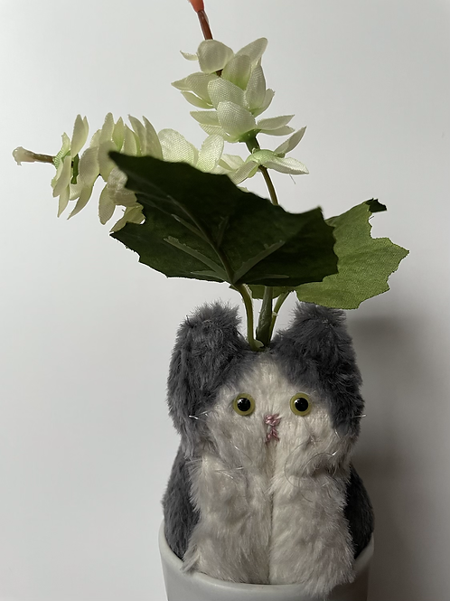 Hop Cat(ホップ)
