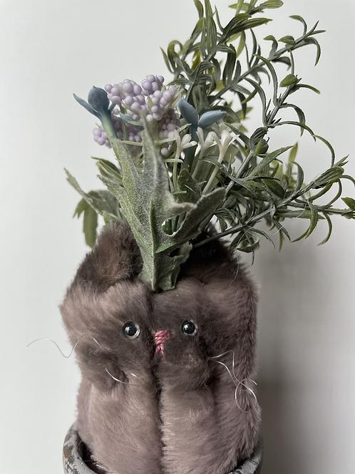 Herbal Cat(ハーブ)