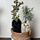 Thumbnail: Pair of Botanicats:(寄植え)