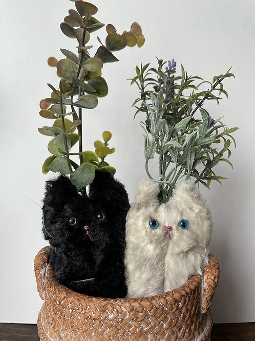 Pair of Botanicats:(寄植え)