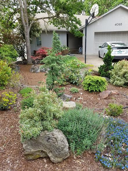 small front yard.jpg