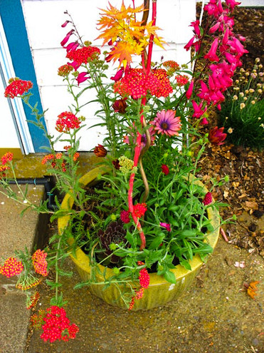 fabulous cheery containers
