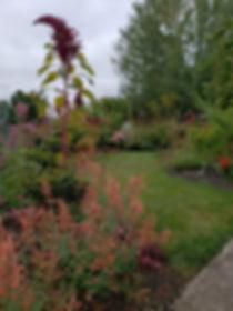 my yard.jpg