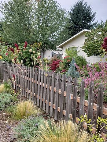 my yard 2.jpg