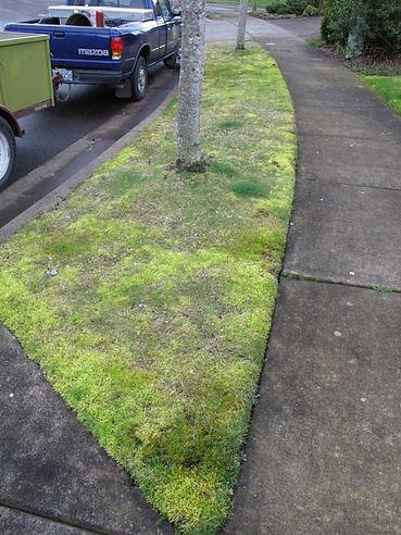 grand oaks strip before.jpg