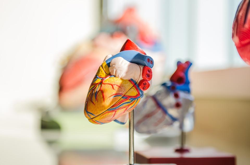 Anatomie & Pathophysiologie: Myokardinfarkt | keto-gen.de | Startseite